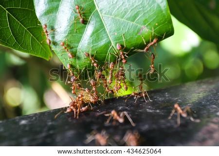 ant energize multiple motion blur. - stock photo