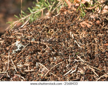Ant hill on a sunny day took very close - stock photo