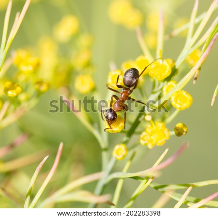 ant in nature. macro - stock photo