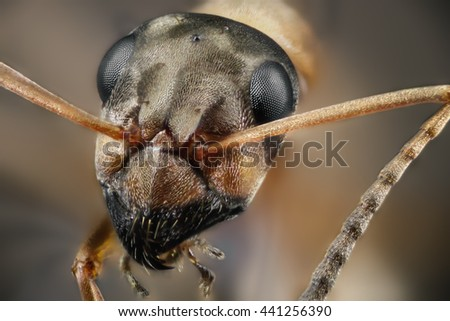 ant mcro insect antenna close summer flora - stock photo
