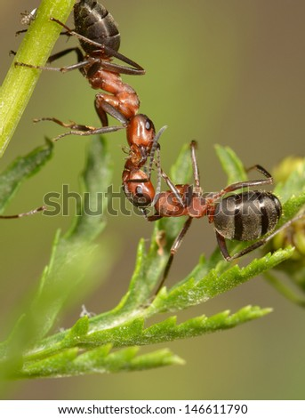 ant meet and greet - stock photo
