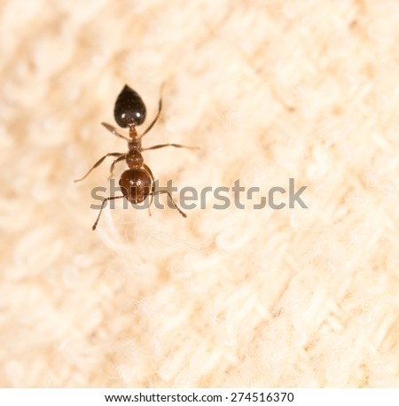 ant on material - stock photo