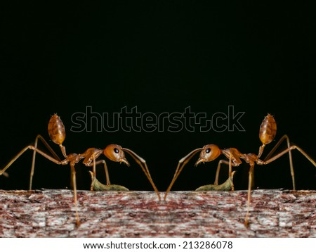 ant walk on the wooden on dark background. - stock photo