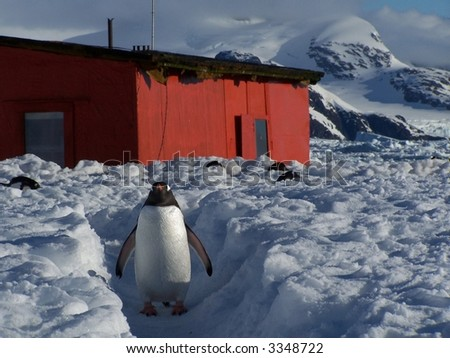 Antarctic penguin in front of a scientific building. - stock photo