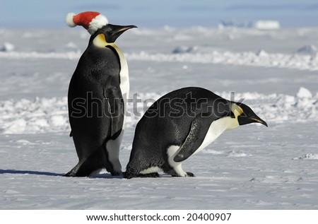 Antarctic penguin pair on Xmas - stock photo