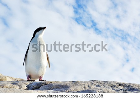 Antarctic pinguin and pretty view on antarctic wildlife - stock photo