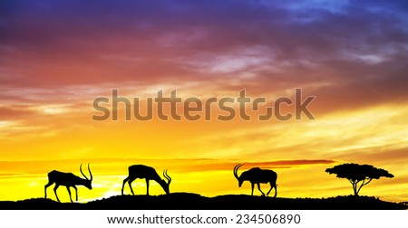 antelope eating for the Mountains at sunset - stock photo