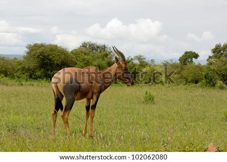 Antelope Marsh - stock photo