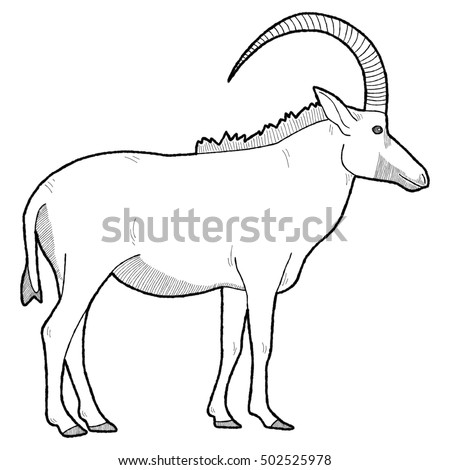 Horse Button Braid Stock Vector 222871873 - Shutterstock