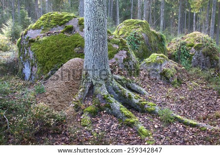 anthill at tree foot in forest with stones