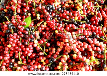 Antidesma thwaitesianum Mull.Arg ., Ma-mao water thai name of the Isan region of Thailand fruit with medicinal properties.