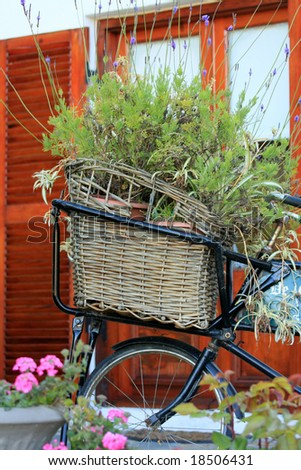 Antique bicycle with basket filled with lavender