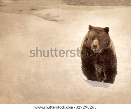 Antique Grizzly Bear in Snow