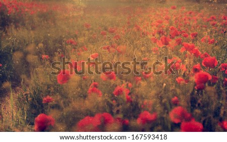 Antique photo of beautiful poppy field - stock photo