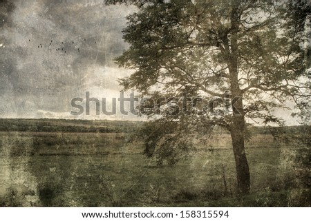Antique photo of huge tree - stock photo