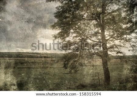 Antique photo of huge tree - stock photo