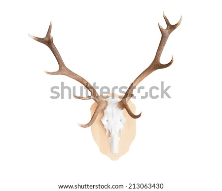 Antler or horn isolate on white background for decoration - stock photo