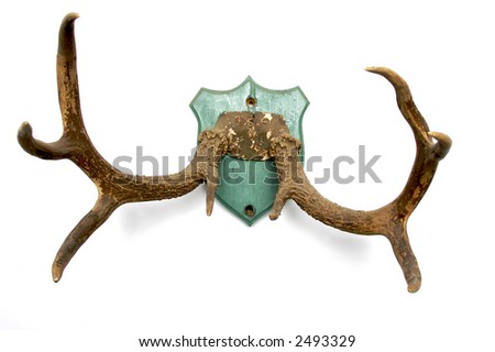 antlers mounted on an old plaque