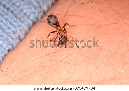 ants - stock photo