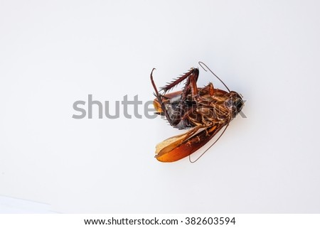 Ants are the main dead cockroaches. - stock photo