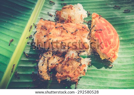 Ants attacking food - stock photo