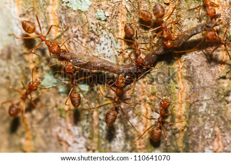 Ants carry food. - stock photo
