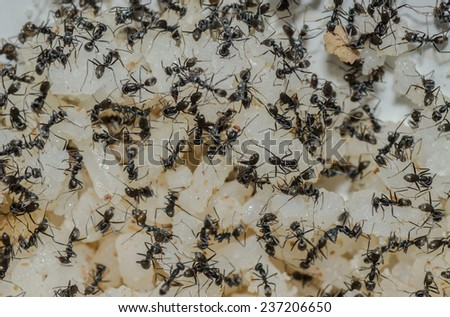 Ants eat - stock photo