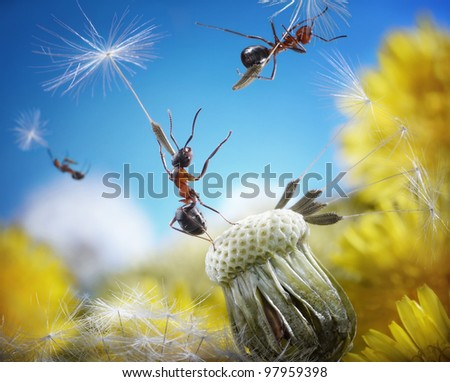 ants flying away with crafty umbrellas - dandelion seeds, ant tales - stock photo