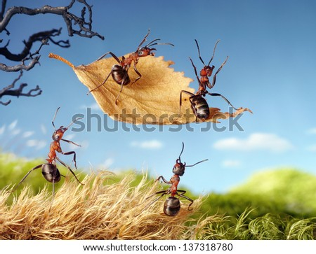 ants flying on autumn leaf, ant tales - stock photo