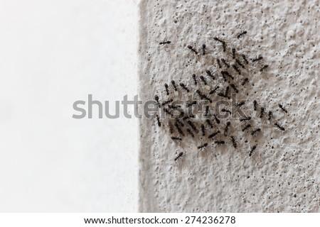 Ants help each embryo transfer - stock photo