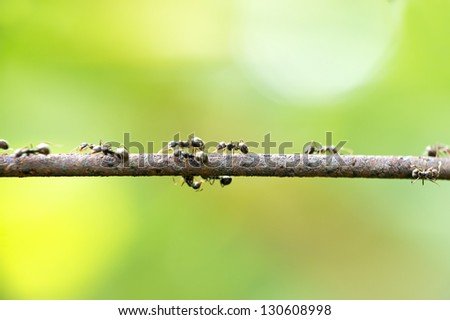 ants in nature walking on a rusty iron rods (DOF) - stock photo