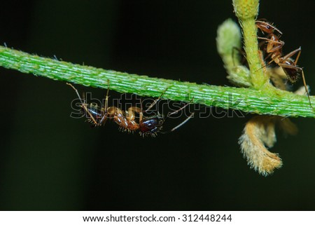 Ants, insects, macro Ants - blurred background - stock photo