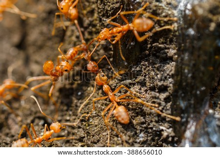 Ants, insects,nature - stock photo