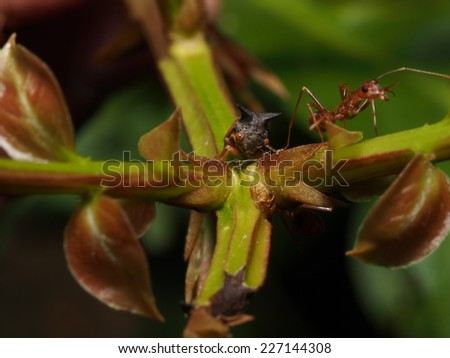 Ants is consuming the sweety mineral from other Bug