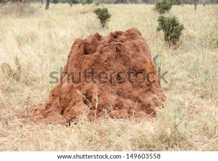 Ants made a big termite hill on grassland from red sand  - stock photo