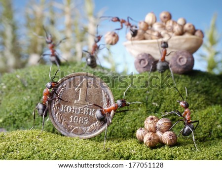 ants market, buy, ant tales - stock photo