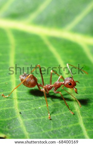 ants on a leaf - stock photo