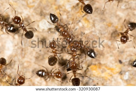 ants on the ground. close