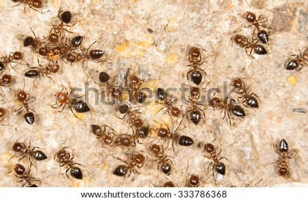 ants on the ground. close - stock photo