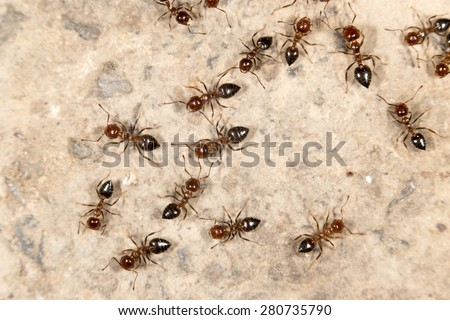 ants on the ground. close-up - stock photo