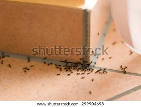 Ants pest inside of home