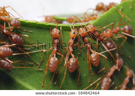 Ants symbol of unity/ants built a home/ant - stock photo