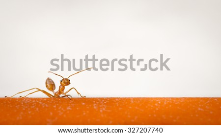 Ants walking on a branch.  - stock photo