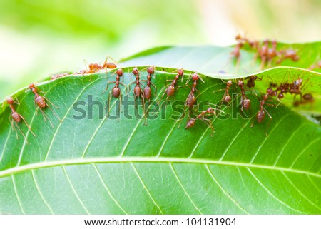 Ants will nest in the park. - stock photo