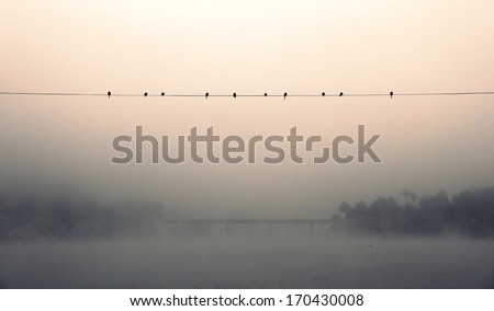 Any birds in fog - stock photo