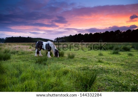 Apache horse grazing on pasture at dramatic sunset