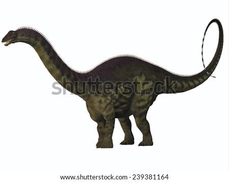 Apatosaurus on White - Apatosaurus also called Brontosaurus is a sauropod dinosaur of Western North America during the Jurassic Era. - stock photo