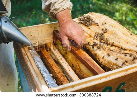 Apiarist is holding one frame of honeycomb and using smoke to calm beehive colony, close up - stock photo