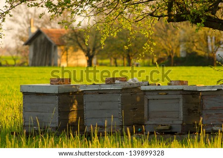 Apiary on the meadow on sunny summer day. - stock photo