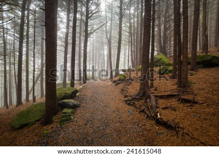 Appalachian Trail North Carolina Outdoors Forest Hiking near Roan Mountain NC and TN border - stock photo